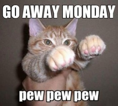 Funny-picture-monday-cat-shoo