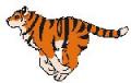 Tiger jog